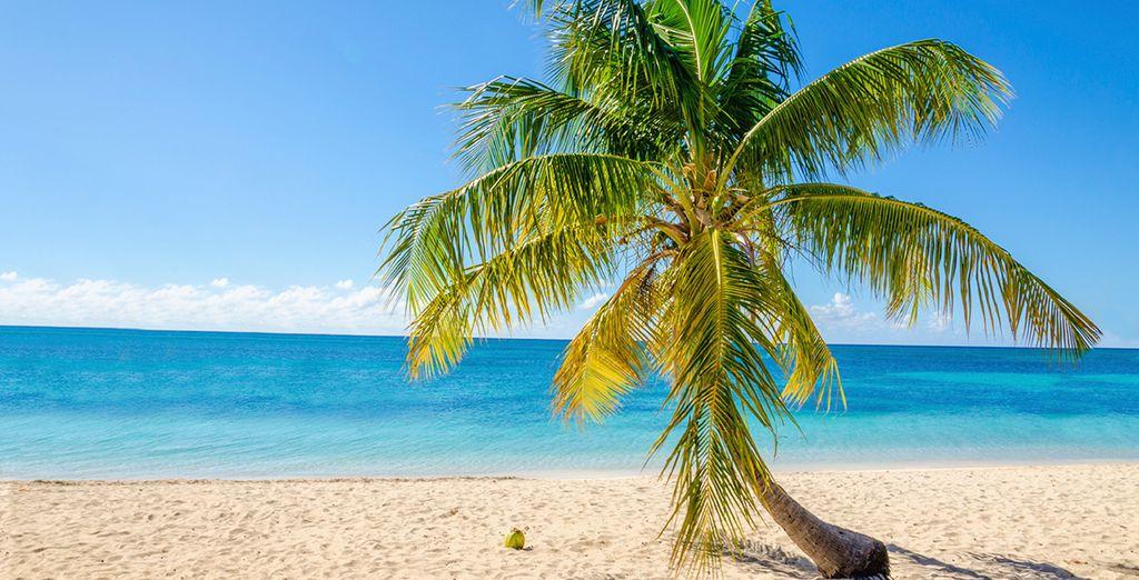 Unwind in paradise