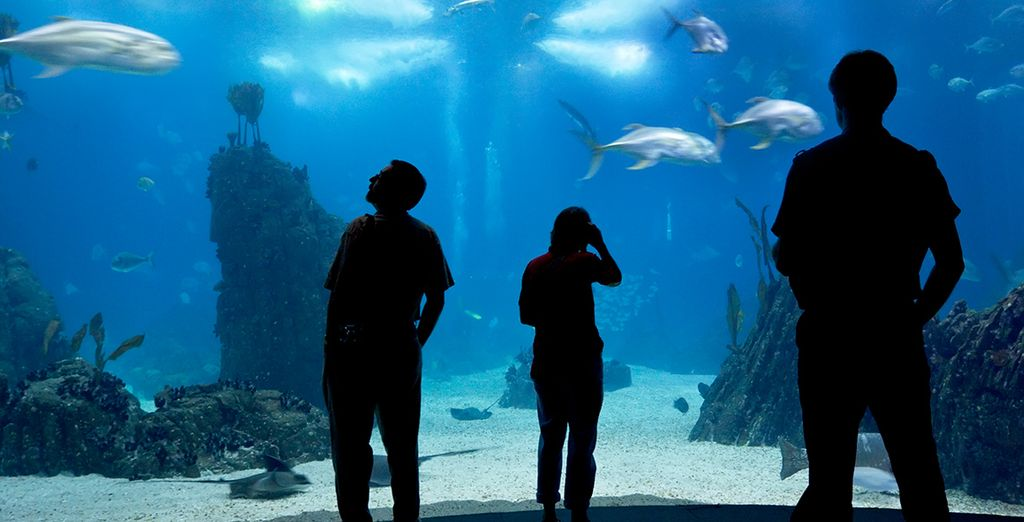 Visit the Oceanarium & Lisbon Zoo