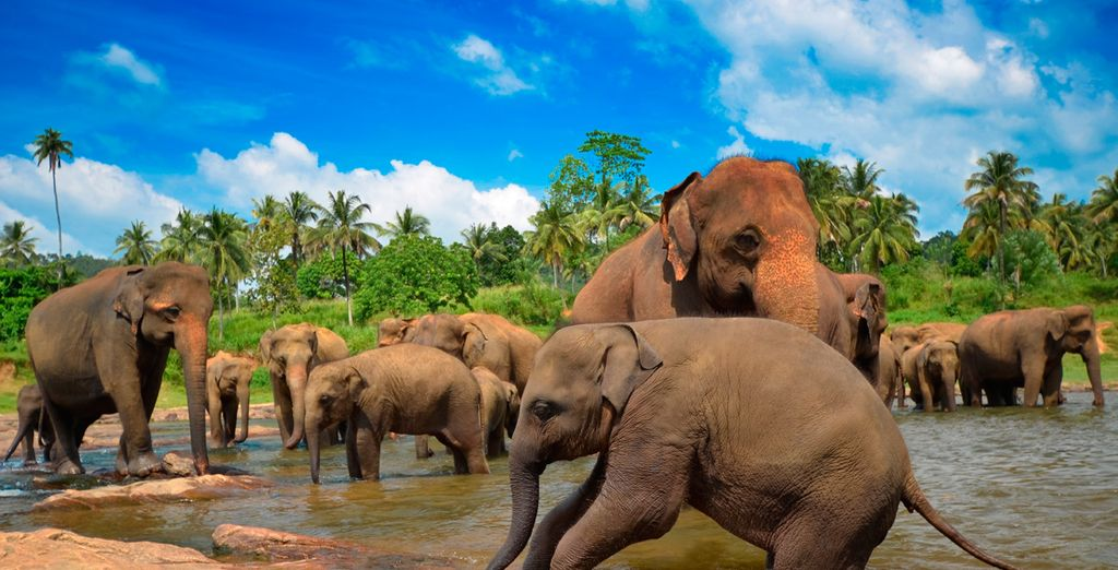Or discover some of Sri Lanka's famous wildlife - our offer has the option to a visit to an elephant orphanage