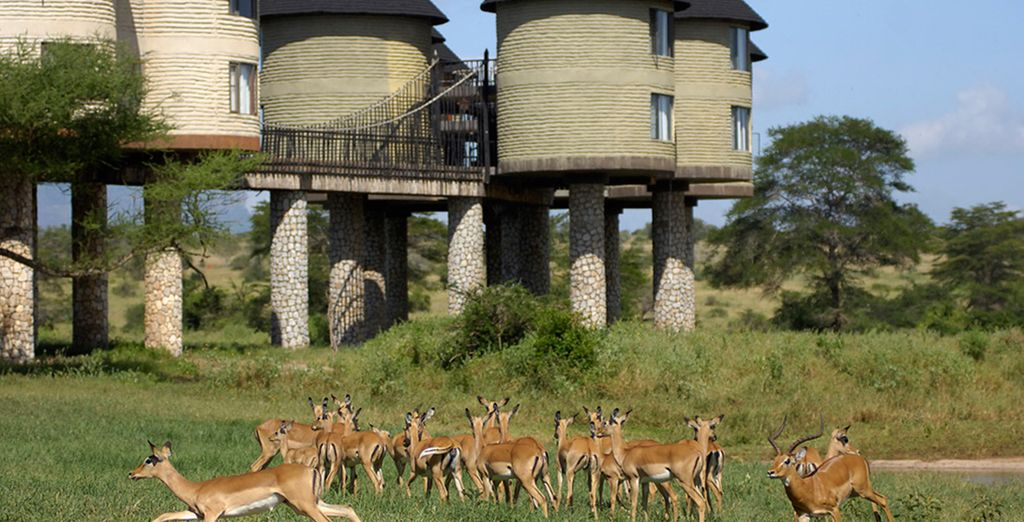 You will be totally immersed in the wildlife around you (pictured: Salt Lick Lodge)