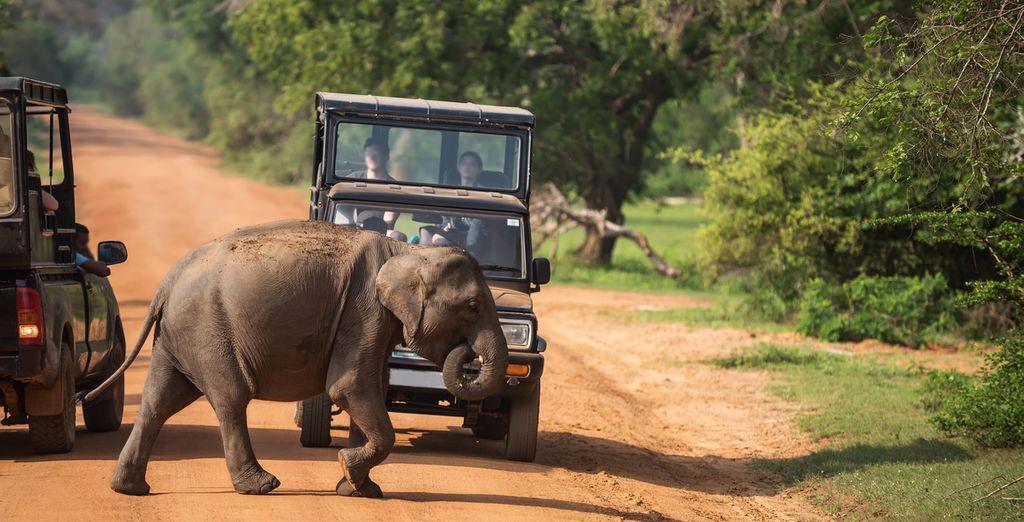 Discover Sri Lanka's wildlife on a jeep safari in Udawalawe National Park