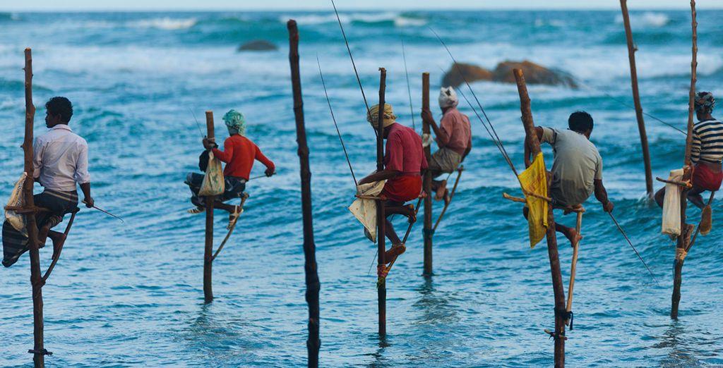 Embark on a tour of Sri Lanka