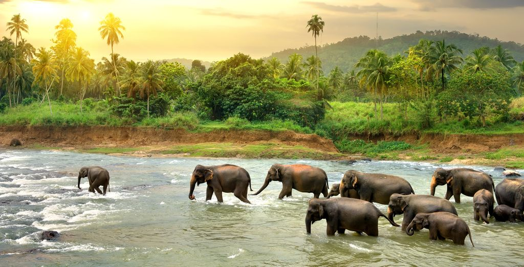 Meet the locals and visit an elephant orphanage during your holidays to Sri Lanka