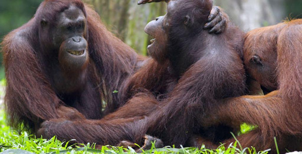 - Kuala Lumpur, Borneo Wildlife and Beach**** - Various Various