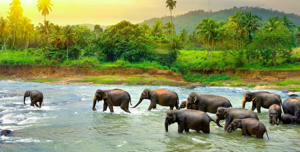 Discover beautiful Sri Lanka
