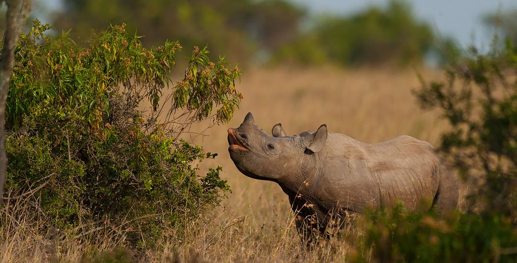 Then end your trip with a visit to Elandela Private Game Reserve