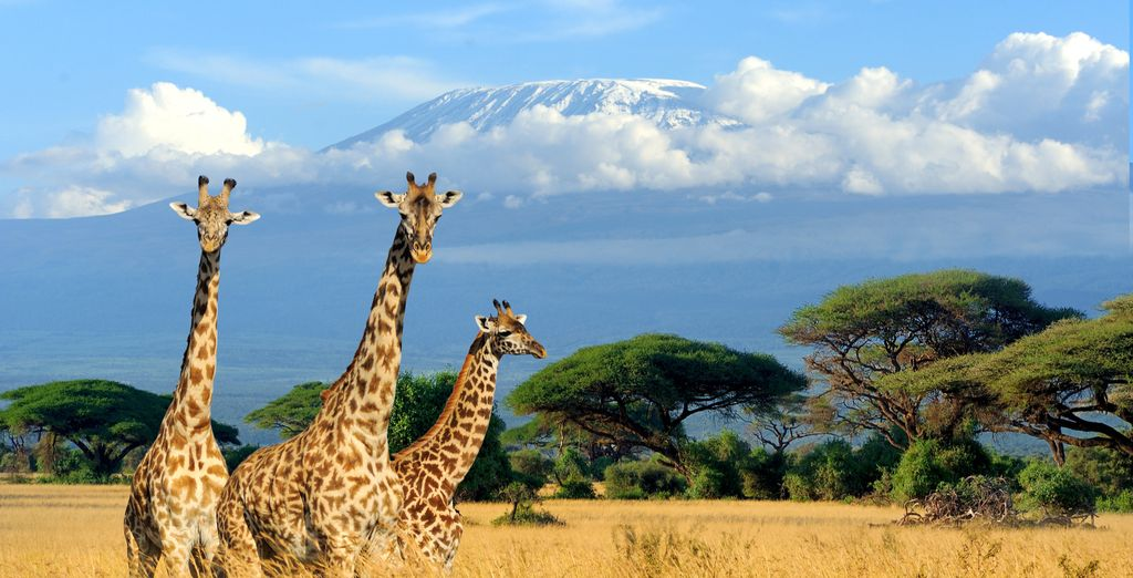 Safari Through Incredible Tanzania