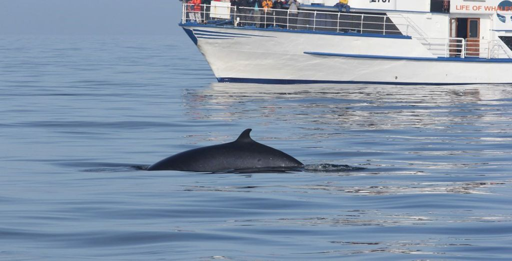 Whales and dolphins often spotted include minke whales, humpback whales, harbour porpoises and white-beaked dolphins!