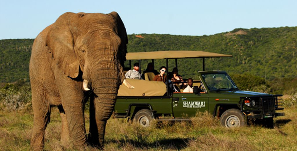 - Shamwari Game Reserve - Eastern Cape - South Africa Shamwari Game Reserve