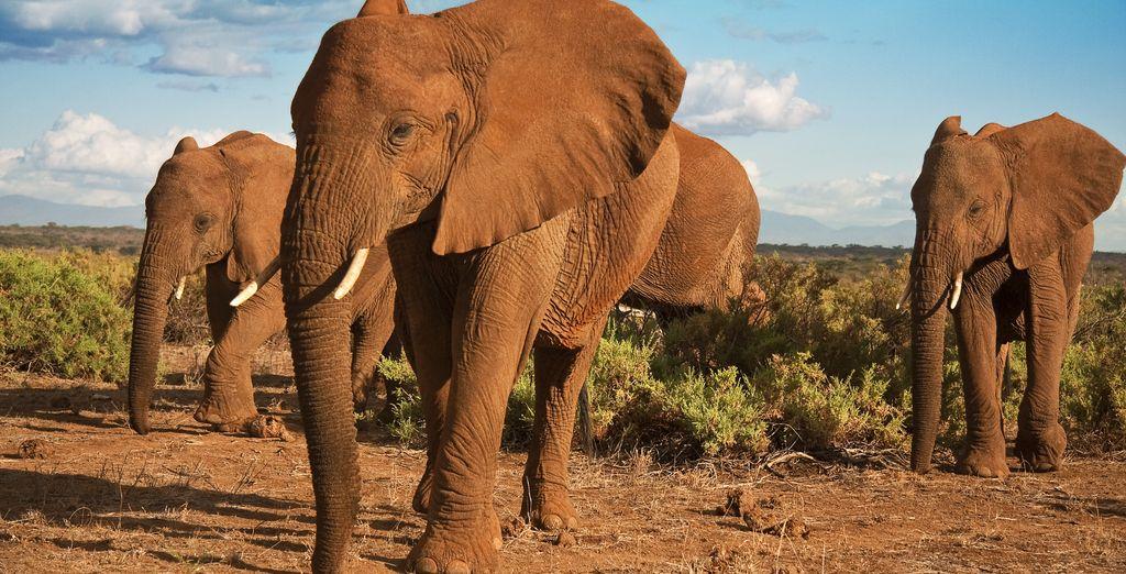 Epic wildlife....