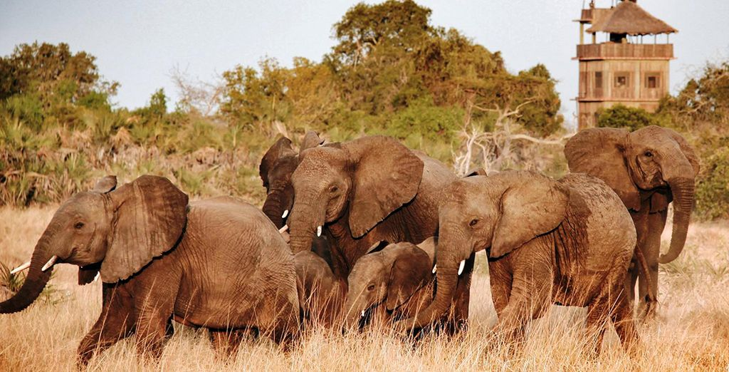 And immerse yourself in wildlife, on this exciting twin centre break!