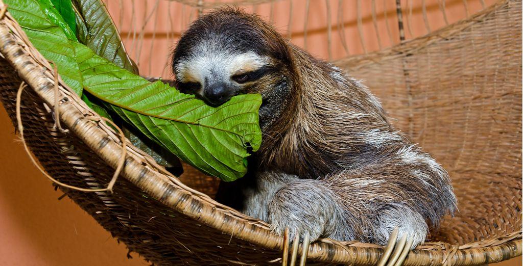 You'll even visit a Sloth Sanctuary!