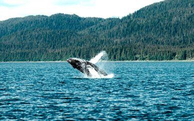 Canadá con safari fotográfico de ballenas
