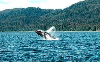 Canadá con avistamiento de ballenas