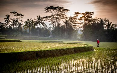Bali Exótica: Ubud y Playa