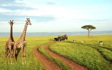 Tour tra il meglio del Kenya