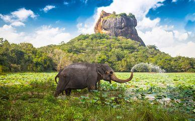 Tour privato in Sri Lanka con possibile soggiorno a Dubai