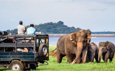 Private Sri Lanka Tour and Amaya Beach Passikudah 4*