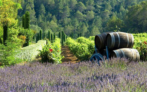 Welkom in...de Provence