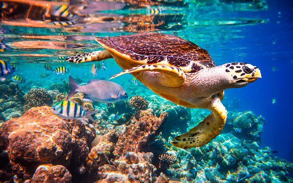 Uw strandverlenging in de Malediven