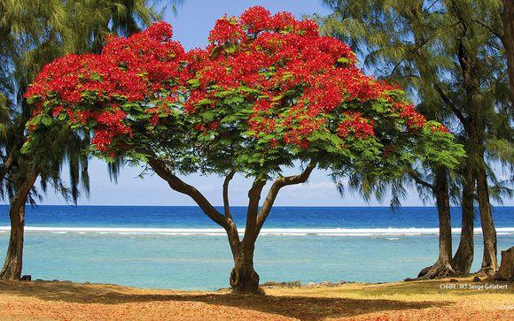 Willkommen auf der Insel... La Réunion!