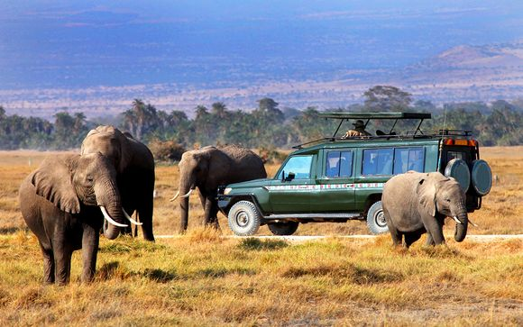 Ihre Safaris im Detail