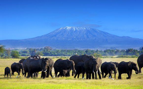 Safari Tsavo Est / Amboseli / Saltlick - 4 Tage / 3 Übernachtungen