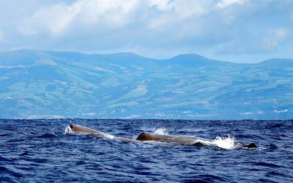 Avistamiento de ballenas y delfines con Futurismo