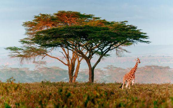 Kenia le espera