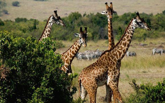 Tu safari de 1, 2 o 3 noches