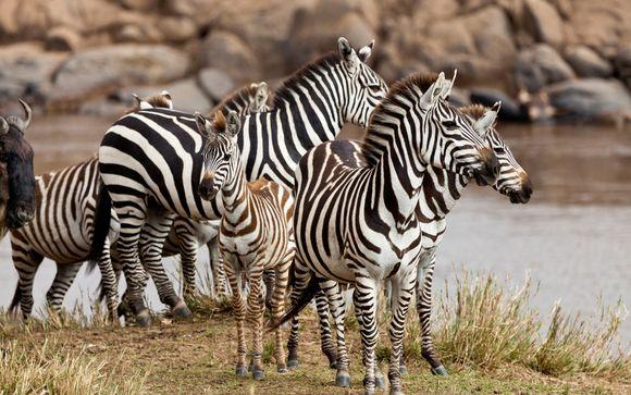 Opción Safari 2 noches