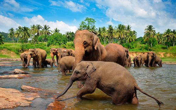 Sri Lanka Colombo - Espectacular vida salvaje desde 1.553,00 €