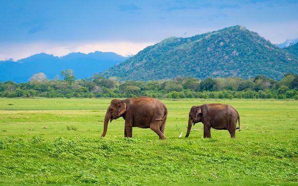 Descubre Sri Lanka en familia