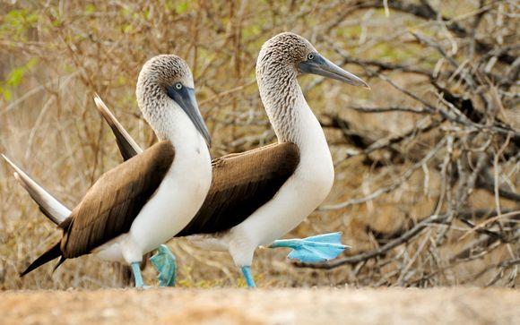 Zoom sur vos deux nuits aux Galapagos