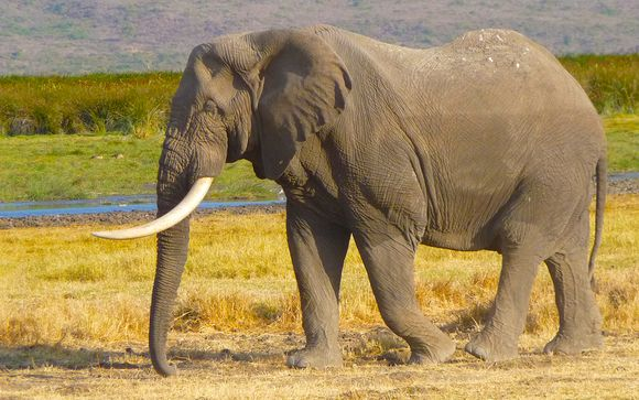 Safari privé au Ngorongoro et extension balnéaire à Zanzibar