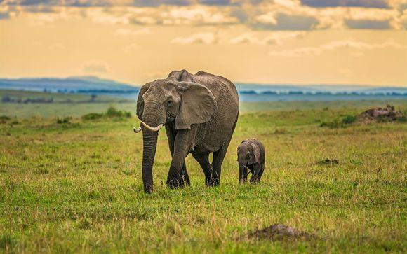Zoom sur votre programme Merveilles du Kenya