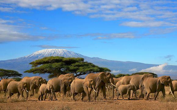 Safaris et farniente au bord de l'océan