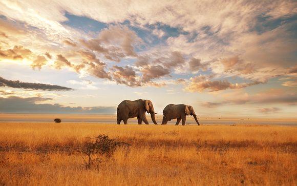 Zoom sur les safaris possibles (offre 2)