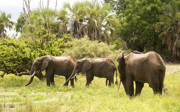 Zoom sur votre safari de 2 nuits possible (offre 2)