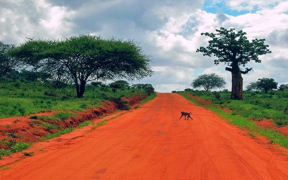 Zoom sur vos safaris (si vous choisissez l'offre 1)