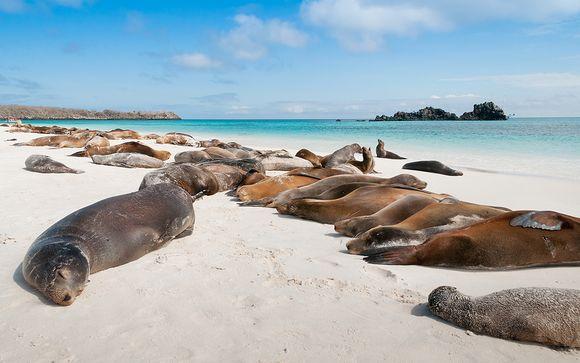 Circuit Découverte de l'Équateur et des Galapagos