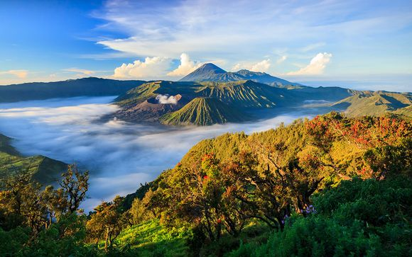 Suivez-nous... A Bali