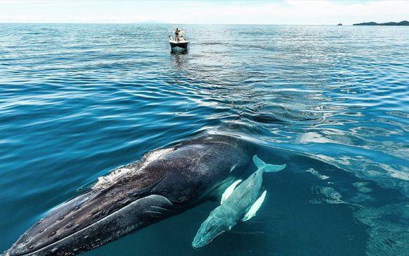 Expérience unique : à la rencontre des baleines