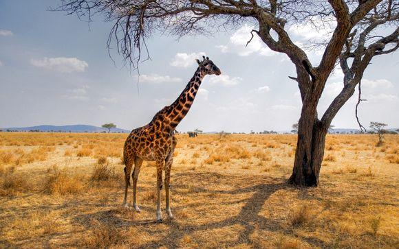 Votre Autotour Big Five avec séjour en réserve privée et lodge 4* dans la région du Parc Kruger selon l'offre choisie