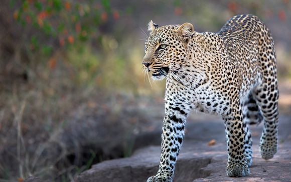 Zoom sur votre safari