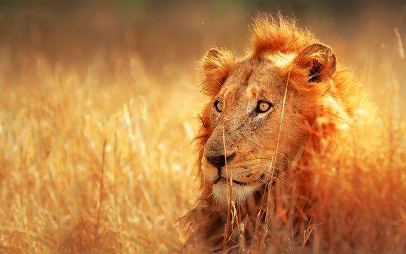 Tour Natura, Cultura e Safari in Sudafrica