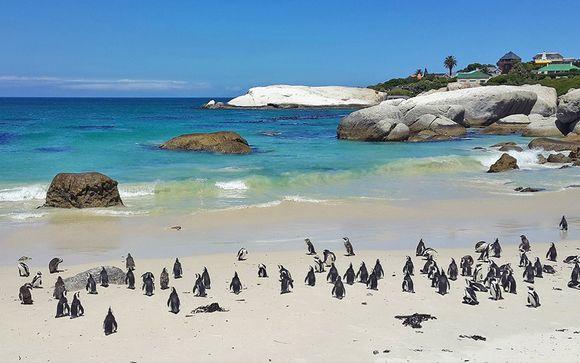 Il meglio del Sudafrica in un tour emozionante