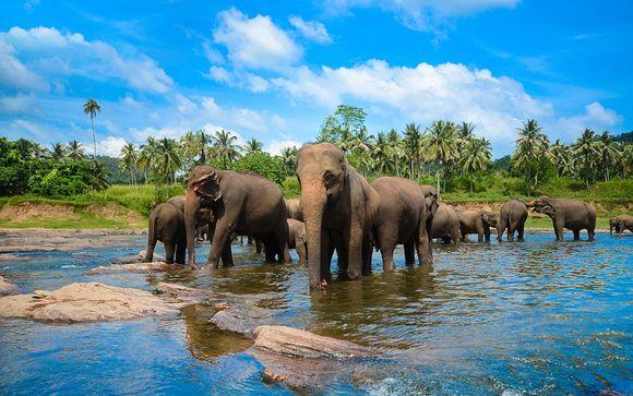 Tour Sri Lanka 7 notti