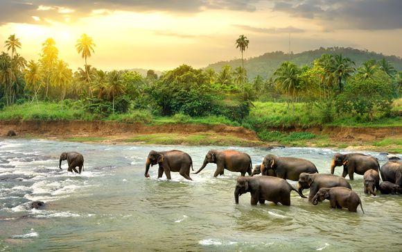 Tour Sri Lanka