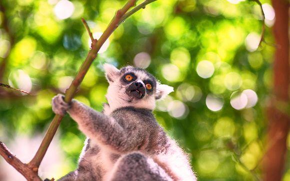 Alla Scoperta Del Madagascar in tour